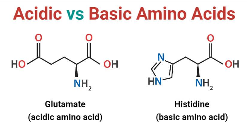 Acidic Amino Acids vs Basic Amino Acids