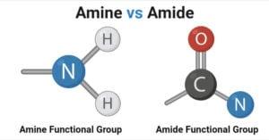 Amines vs Amides