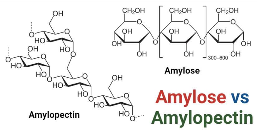 Amylose vs Amylopectin
