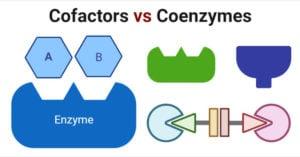 Cofactors vs Coenzymes