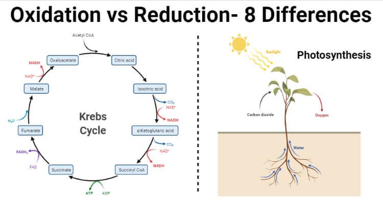 Oxidation vs Reduction