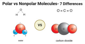 Polar vs Nonpolar Molecules