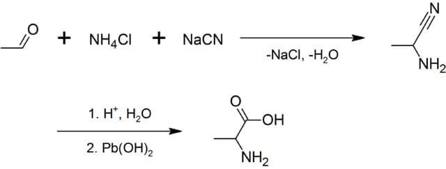 Biosynthesis ofAlanine