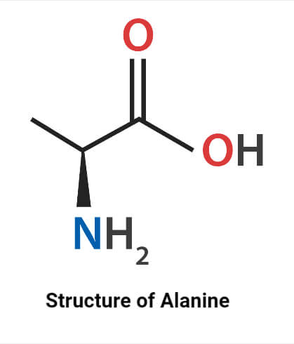 Structure ofAlanine